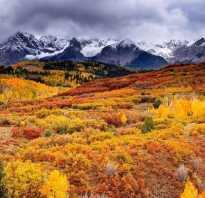 Осенний лес тумблер