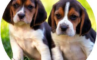 Как выбрать собаку для себя тест